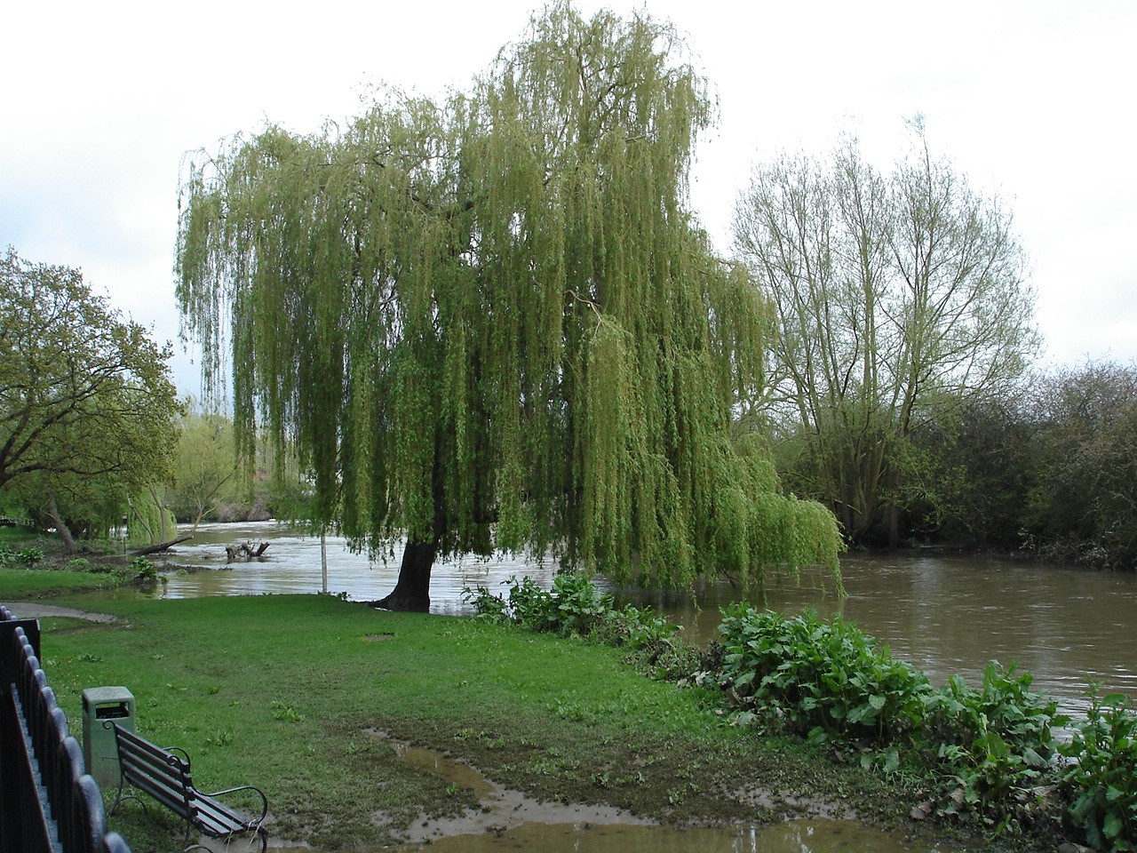 Willow by the Mill